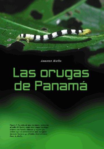 Las orugas de Panama