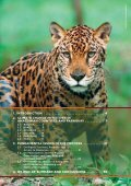 Rights and REDD in Amazonian Countries and Paraguay - Page 3