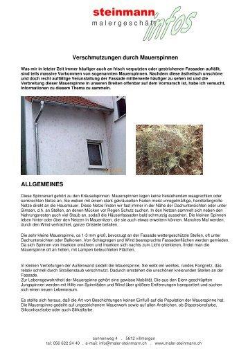 Verschmutzungen durch Mauerspinnen