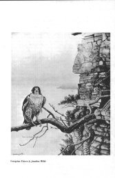 Wisconsin peregrine falcon recovery plan