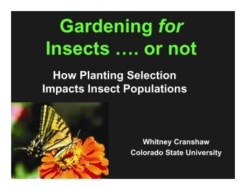 Gardening for Insects …. or not - Colorado State University