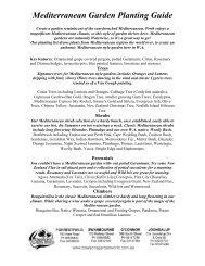 Mediterranean Garden Planting Guide - Dawson's Garden World