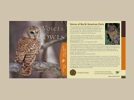 Voices of North American Owls - Cornell University
