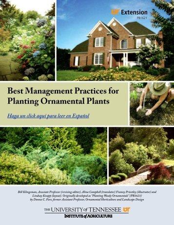 Best Management Practices for Planting Ornamental Plants