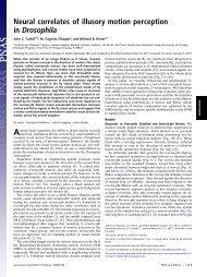 Neural correlates of illusory motion perception in Drosophila