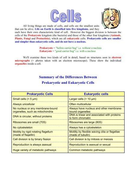 difference between prokaryotic and eukaryotic