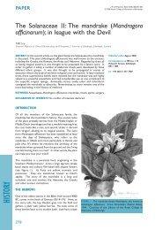 The Solanaceae II: The mandrake (Mandragora officinarum); in ...