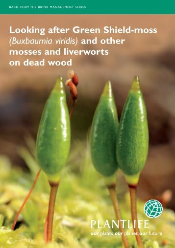 Looking after Green Shield-moss (Buxbaumia viridis) and ... - Plantlife