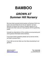 BAMBOO - Summer Hill Nursery