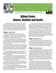 Allium Crops: Onions, Shallots and Garlic - The LSU AgCenter