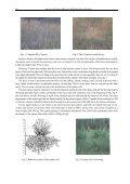 ESPARTO GRASS (STIPA TENACISSIMA L), RAW MATERIAL OF ... - Page 2