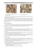 ESPARTO GRASS (STIPA TENACISSIMA L), RAW MATERIAL OF ... - Page 4