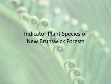 Indicator Plants of New Brunswick
