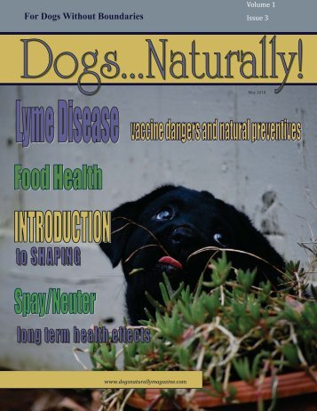 For Dogs Without Boundaries - Dogs Naturally Magazine