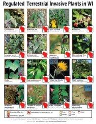 Regulated Terrestrial Invasive Plants in WI - Wisconsin Department ...