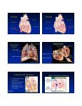 Circulatory System Functional Connections Circulatory System Parts ... - Page 6