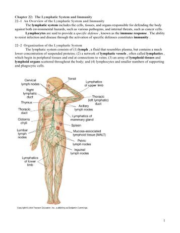 Chapter 21 The Lymphatic System