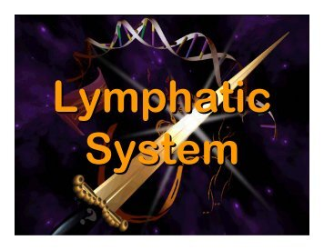 Lymphatic system - Elizabeth Bauer Consults