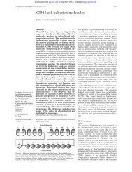 CD44 cell adhesion molecules - Journal of Clinical Pathology