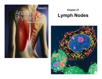 Chapter 21 Lymph Nodes