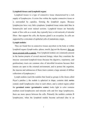 lymphoid nodules
