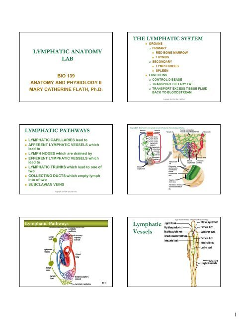 Lymphatic Anatomy Lab PPT-PRINT