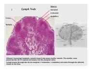 Lymph Node 1