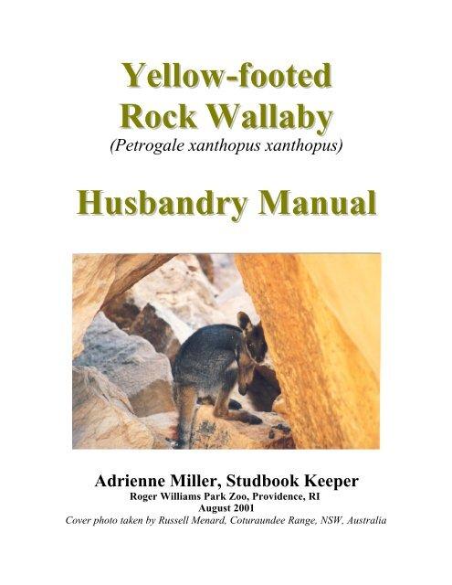 Yellow-footed Rock Wallaby Husbandry Manual - Marsupial and ...