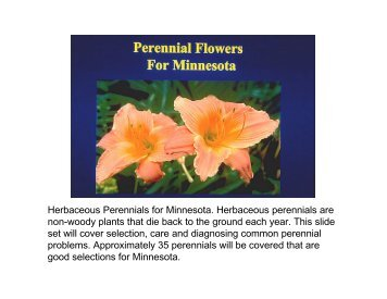 Herbaceous Perennials for Minnesota. Herbaceous perennials are ...