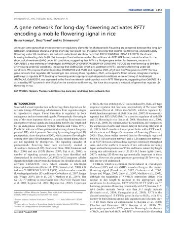 A gene network for long-day flowering activates RFT1 encoding a ...