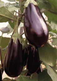 Export Catalogue Eggplant Squash Melon Pumpkin - Enza Zaden