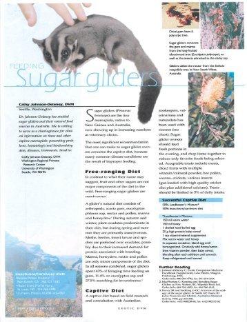 Sugar Glider - West End Veterinary Office