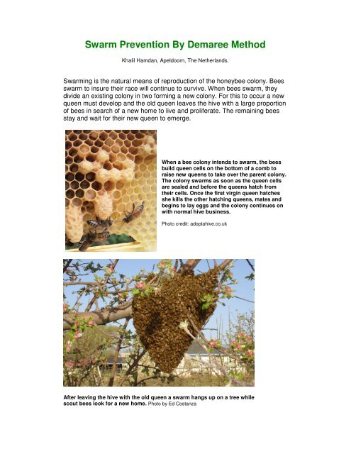 Swarm Prevention By Demaree Method - Country Rubes