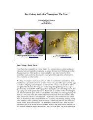 Bee Colony Activities Throughout The Year - Country Rubes