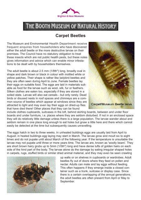 Types Of Bugs Found In Carpets Carpet Bugs Carpet Types Of Carpet