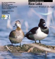 Download Rice Lake Brochure - U.S. Fish and Wildlife Service