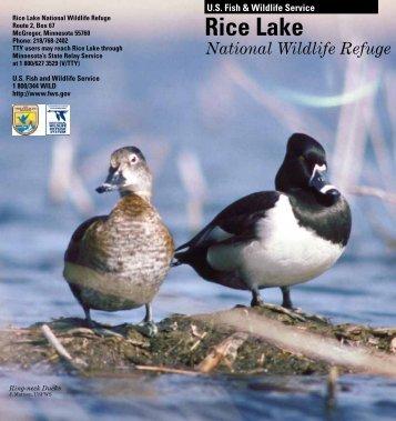 Download Rice Lake Brochure - U.S. Fish and Wildlife Service