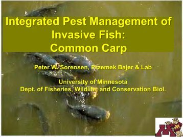 Integrated Pest Management of Invasive Fish: Common Carp