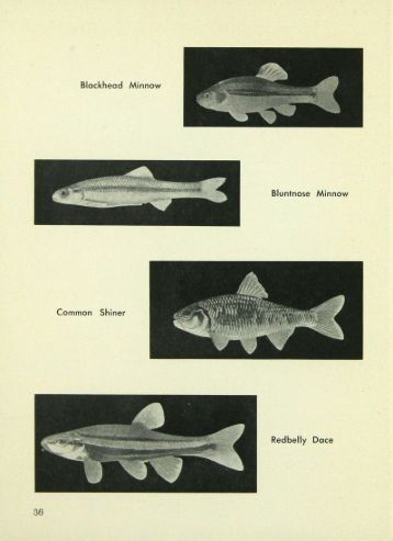4725 Artificial Propagation Needed to Relieve Minnow ... - webapps8