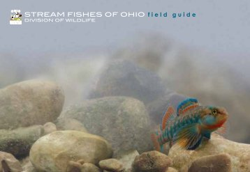 Stream Fishes of Ohio, Field Guide - Ohio Department of Natural ...