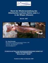 Bericht Lachse in der - Lorch im Rheingau