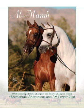01Al Marah SportHorse - Al-Marah Arabians