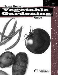 Texas Home Vegetable Gardening Guide - Grimes | Texas AgriLife ...