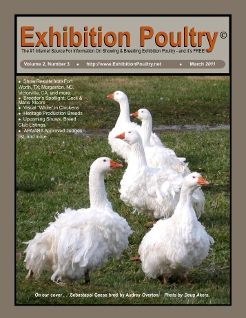 Exhibition Poultry© Exhibition Poultry