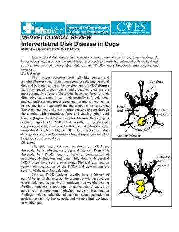 Herniated Disc Surgery - MedVet