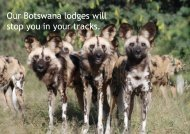 Our Botswana lodges will stop you in your tracks. - Kamili Safaris