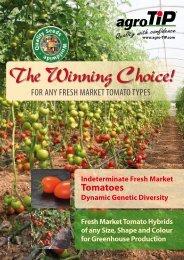 Indeterminate Fresh Market Tomatoes Dynamic ... - agro-TIP Handels