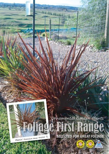 The beautiful long lasting deep - Foliage First Landscape Gardening ...