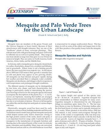 E Tension Seiridium Canker Of Cypress Trees In Arizona