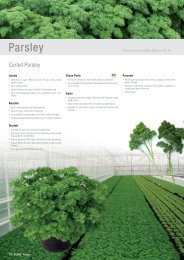 Parsley - HILD samen GmbH